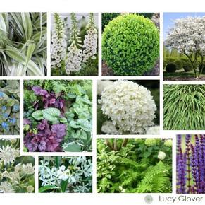 Plant moodboard2