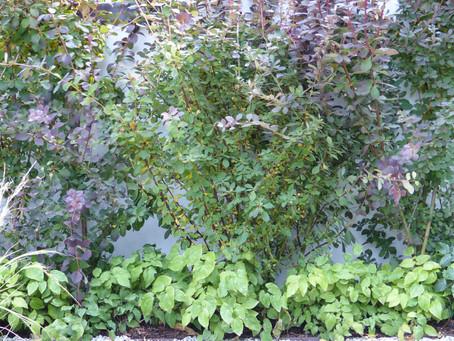 Your garden can deter burglars, and instead attract wildlife
