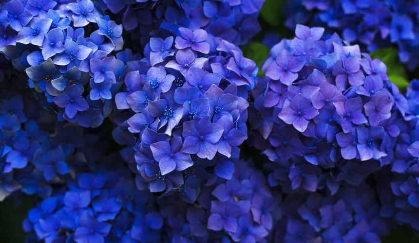 bloom-1851481.jpg