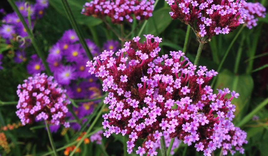 purple-2802825.jpg