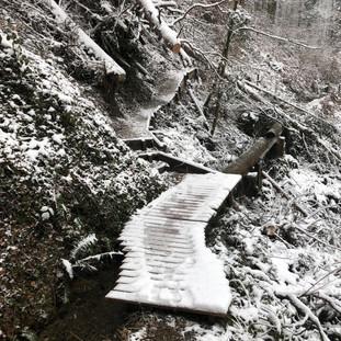 Winter 2021 - Baumschlag