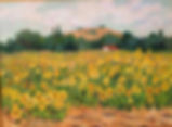 Sun Flower Field 12x16