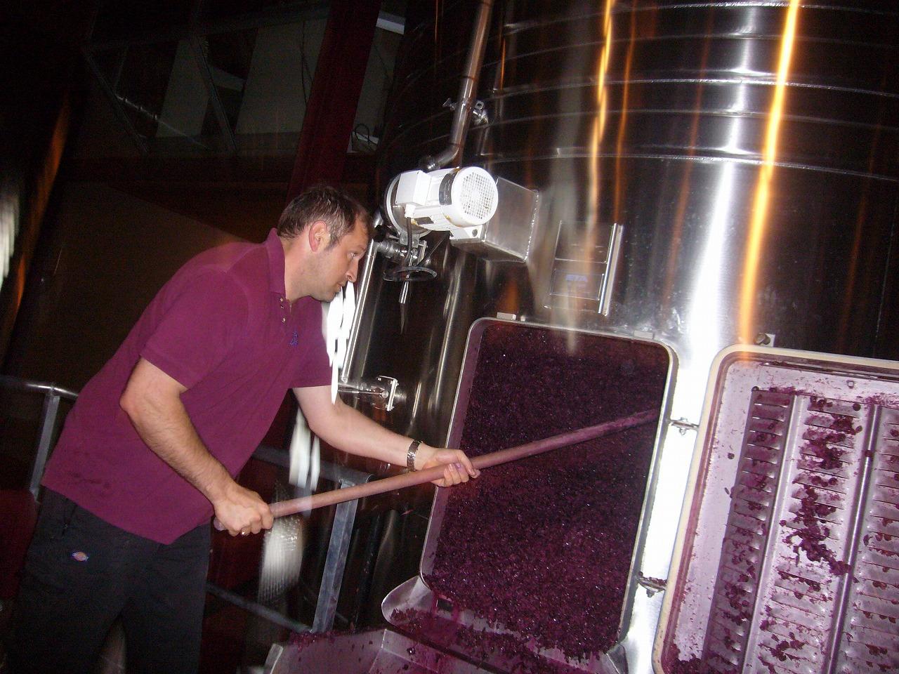 ワインの醸造(搾り後の粕取り)