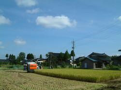 富山県高岡福岡町赤丸 コシヒカリ収穫