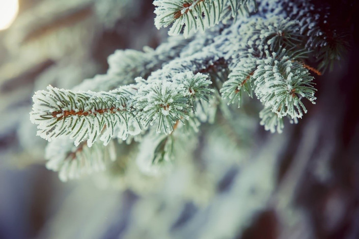 Frosted tree.jpg