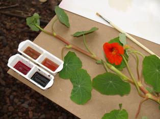 O Desenho e a Botânica