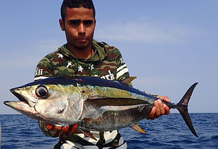 thon atun tuna © Copyright Pesca Colombia