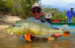 © Copyright Pesca Colombia 2018 - peacock bass on fly