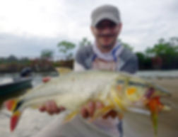 © Copyright Pesca Colombia 2018 - picuda on fly