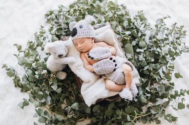 Newborn Session Koala