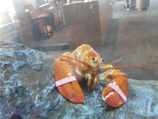 Canicule: des homards cuisent dans les bassins de l'Aquarium et Centre marin