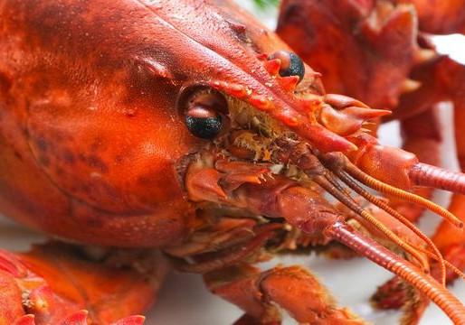 Le syndicat des homards canadiens approuve l'euthanasie avant la cuisson