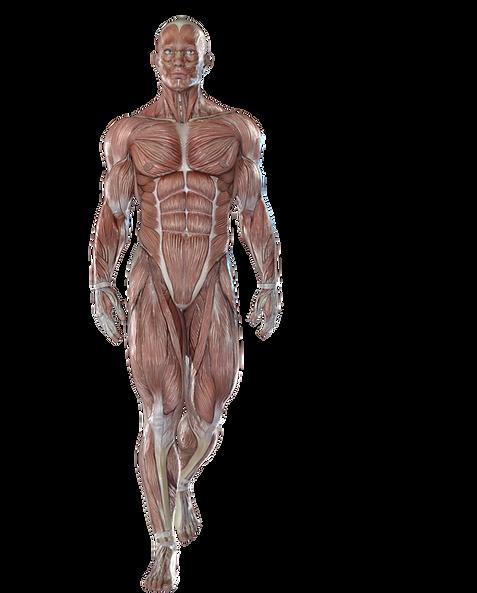 Anatomy Anatomy-train studio Sahana logo