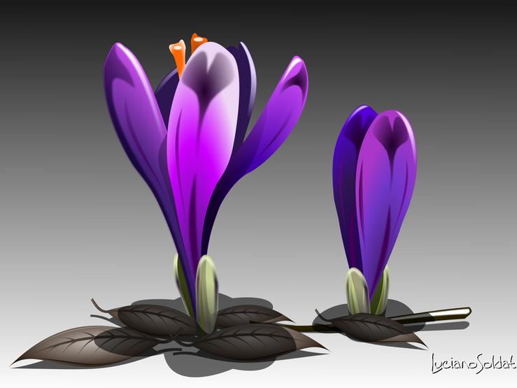Fiore viola.png