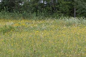champ de fleurs    Denis Lanteigne.jpg