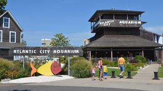 Outing to AC Aquarium - 6/20