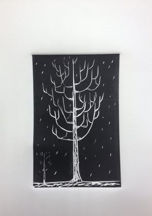 NEW HAVEN TREE