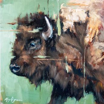 Summer Bison Cow