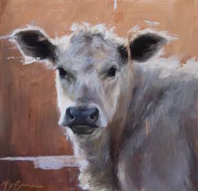 British White Calf