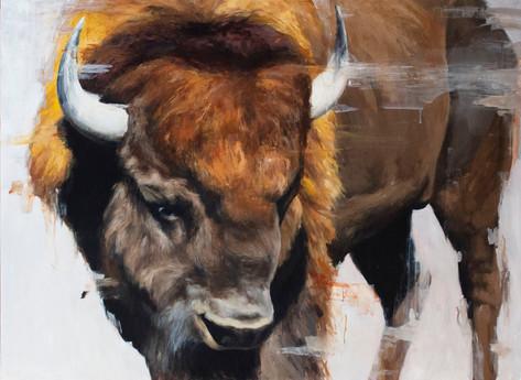 Hayden Valley Bison