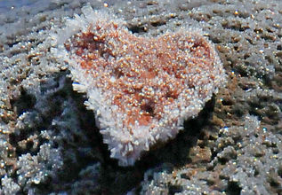 1 Frozen Heart 2 Crop.jpg