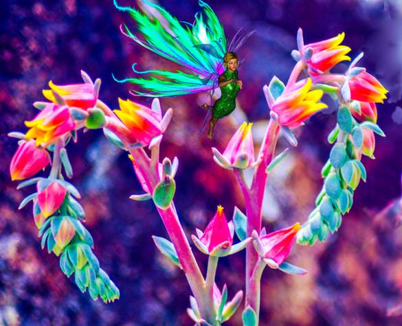Desert Fairy.jpg