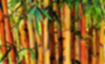 1 Bamboo Leafs DeN YG 2.jpg