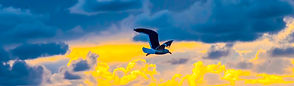 1 SUNSET Gull 2 (1 of 1).jpg