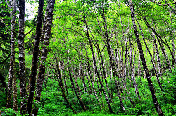 1 Ancient Forest Hdr Medium.jpg