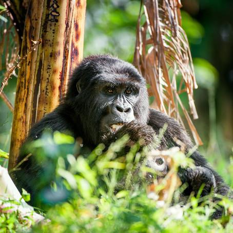 10 Reasons to Travel to Uganda