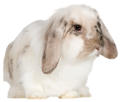 canva-rabbit-MAASscp9S2E