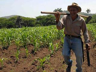 FAO lanzó una nueva estrategia centrada en los núcleos más duros de pobreza y hambre en América Lati