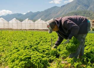Municipios y provincias tendrán mesas participativas para trabajar por la Seguridad Alimentaria en l