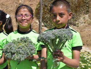 La escuela mexicana donde los alumnos plantan, cosechan y comen juntos