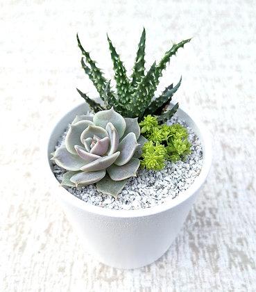 Round Ceramic Arrangement