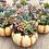 Thumbnail: Medium Succulent Pumpkin (various colours)