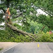 fallen-tree-540x540.jpg