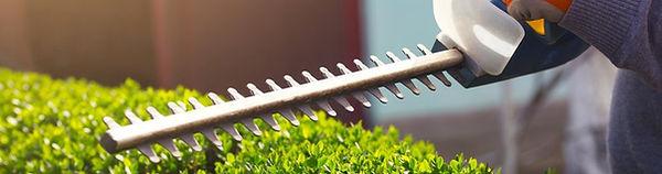 dll-shrub-trimming-pruning-1.jpg