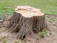 tree-stump-removal-reasons-mister-tree.j