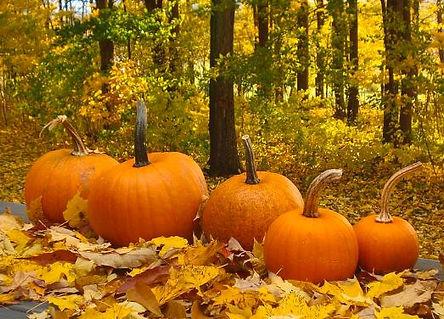 Pumpkin Hunt.JPG