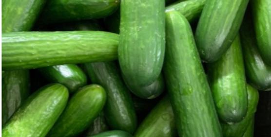 Organic Michigan Seedless Cucumbers 1lb