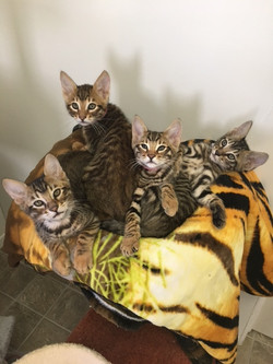 11_15_19 kittens