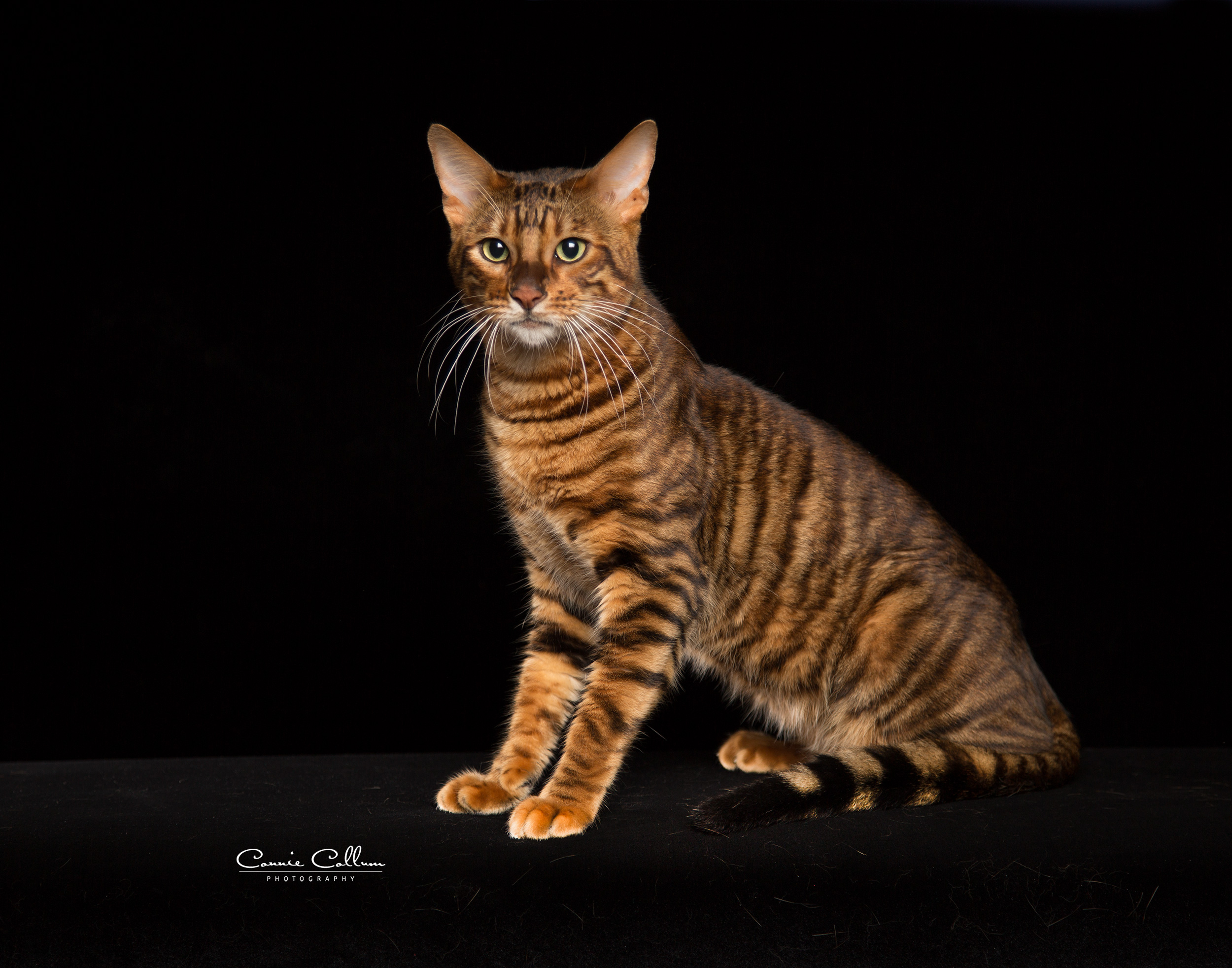 Home | South Paw Toygers