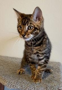 Jasper - charcoal kitty.jpg