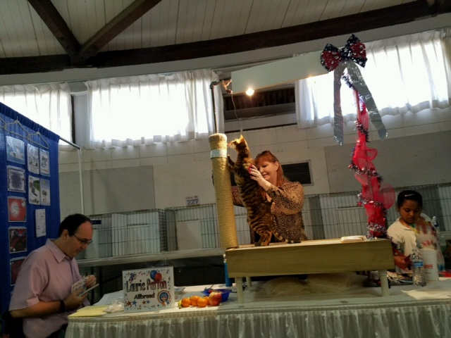 cat show judge 3
