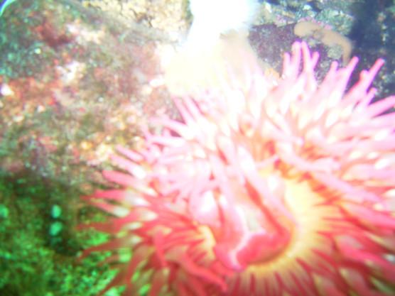 Bamfield June 2006 049.jpg