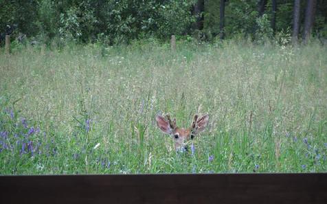 Enjoy your Onyx Creek Estates Wildlife
