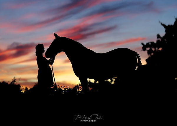 Horse and Rider Silhouette Photo, Equine and Horse Photographer, Massachusetts