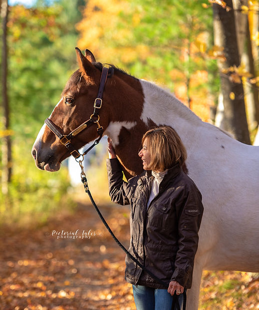 Equestrian Photography in Massachsuetts, Equine and horse Photographer