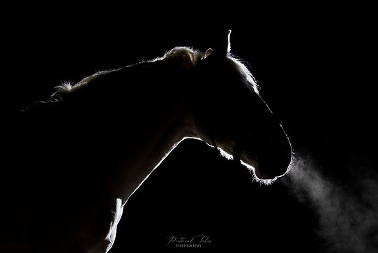 Fine Art Studio Equine and Horse Photographer and Photography in Massachusetts, Rhode Island, Connecticut, Maine, New Hampshire, New England